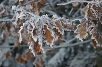 winter-175291_1920